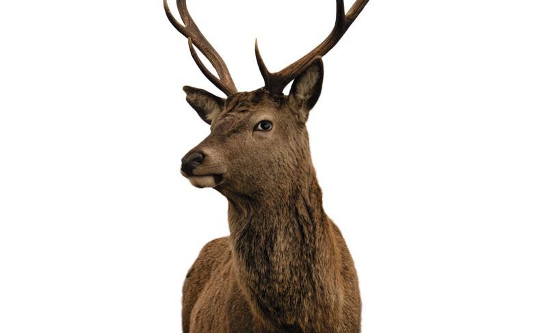 Doe, a deer…