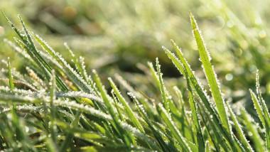 Fristy frosty!