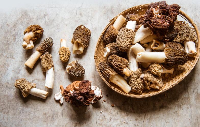 What do I do with… Morel mushrooms